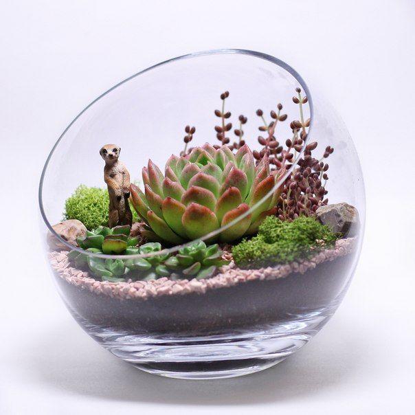 флорариум фото своими руками